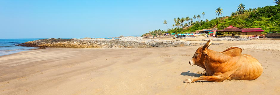Reisetips for Goa
